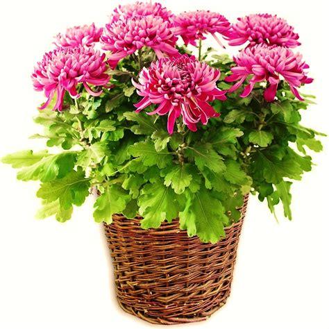 great indoor plants indoor plants with great air purifying properties