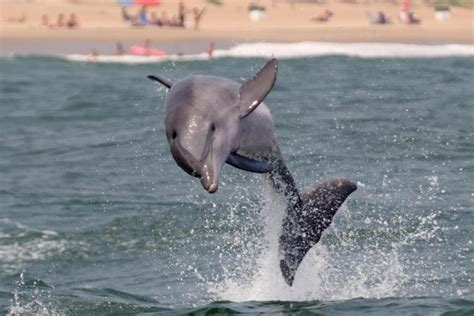 virginia aquarium dolphin watching boat trips 14 places in virginia where animal lovers should go