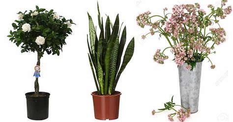 houseplants  relieve stress asthma allergies