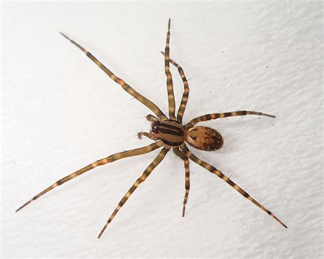 aggressive house spider aggressive house spider pictures house interior