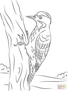 fulvous breasted woodpecker coloring page free printable