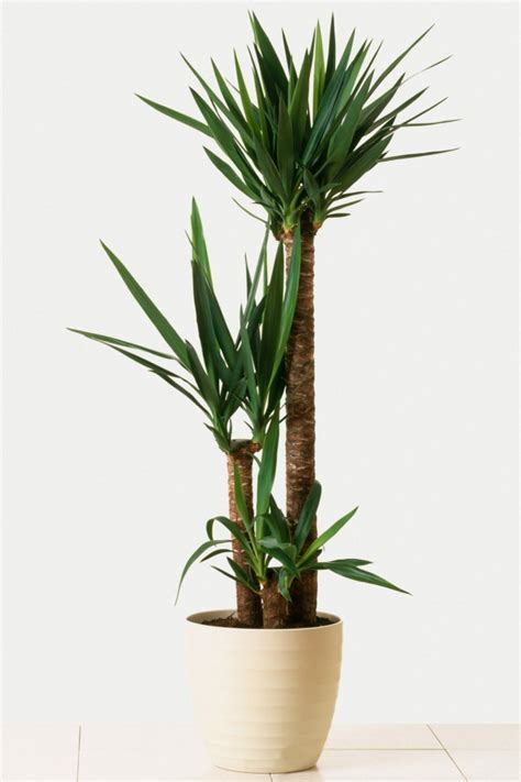 indoor houseplants 4 easy to care for houseplants they won t die on