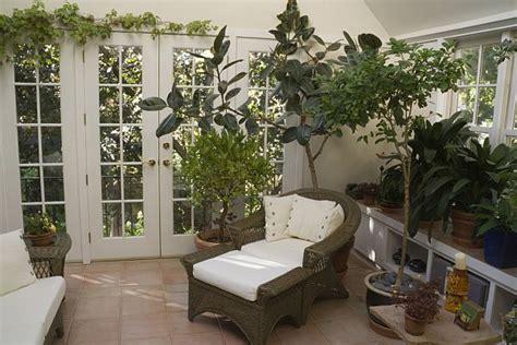 popular interior decoration plants buy cheap interior best air purifying indoor plants ecofriend