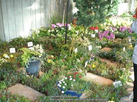 seattle flower garden show seattle flower and garden show chickadee gardens the