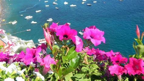i fiori mare i fiori di positano foto immagini piante fiori e