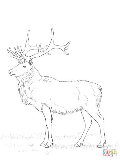 Deer Coloring Pages Kids Colouring Cartoon Reindeer ... Whitetail Buck Drawings
