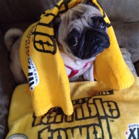 pug rescue pittsburgh the official september 11th 2016 pittsburgh pa setlistvision thread the circuit