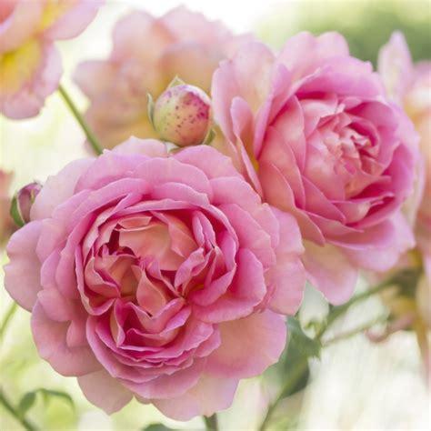 Floral Prints by Nature To Print Nat 252 Rlich Sch 246 Ne Blumenbilder Nach Wunsch