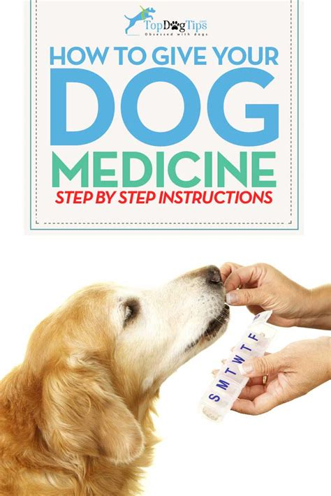 how to give a puppy a how to give a medicine vitamins actionable advice