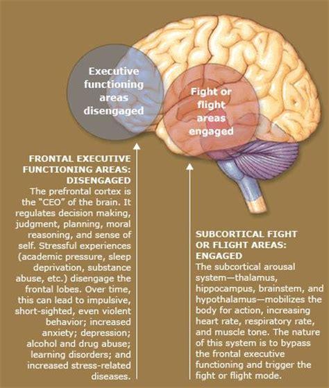 Brain Stress - stress the brain and ptsd on
