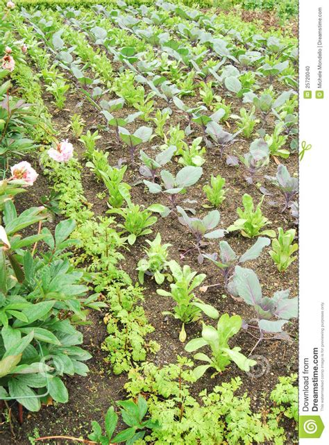 vegetable garden ireland garden stock photo image 25720040