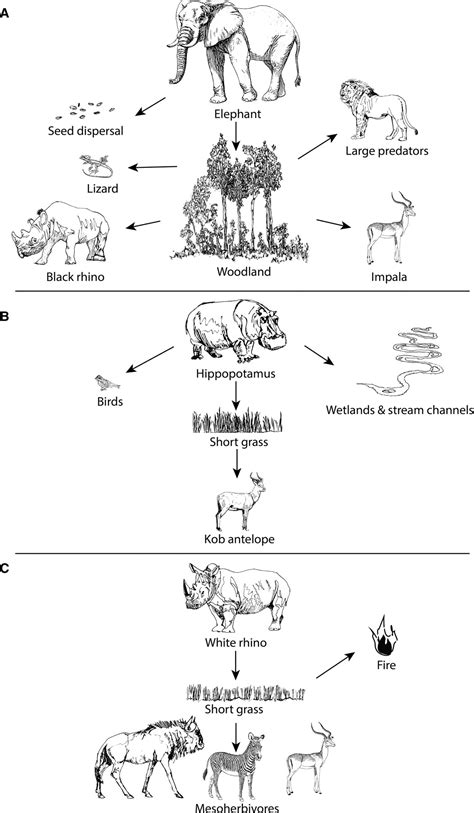 Collapse of the world's largest herbivores | Science Advances