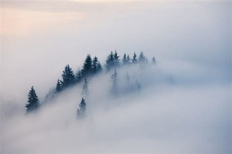 the meaning and symbolism of the word   fog