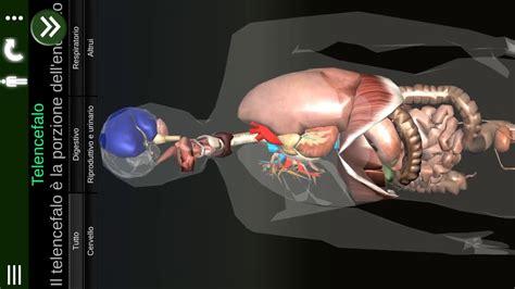 corpo umano anatomia organi interni organi interni 3d anatomia quot it quot