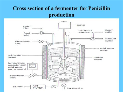 production section production of enzymes by fermentation method ppt video