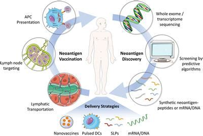 frontiers neoantigen vaccine delivery  personalized anticancer immunotherapy immunology
