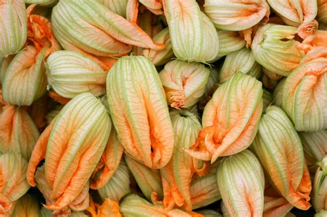 come si fanno i fiori di zucca fritti la ricetta dei fiori di zucca fritti in pastella croccante