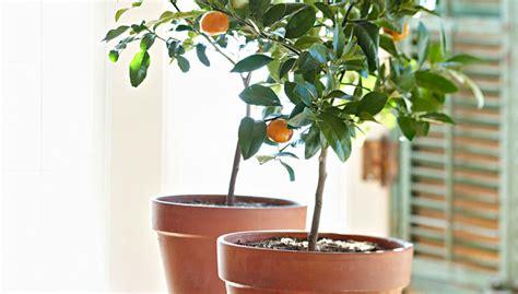 Lime Green Bathroom Ideas by Dwarf Fruit Trees