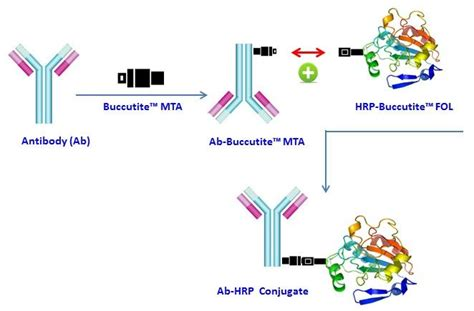 protein l hrp buccutite peroxidase hrp antibody conjugation kit