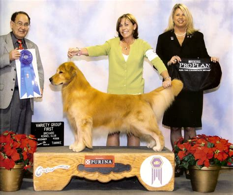 columbus golden retriever club nautilus golden retrievers plymouth ma usa
