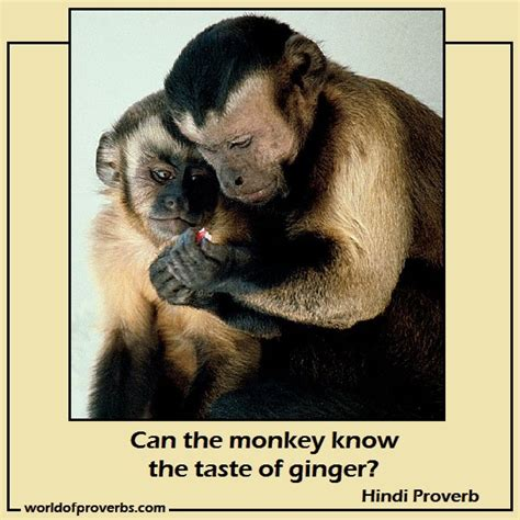 new year monkey proverbs monkey quotes quotesgram