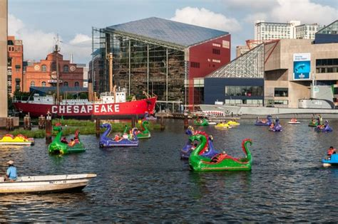 paddle boats in baltimore dragon paddle boats picture of baltimore maryland