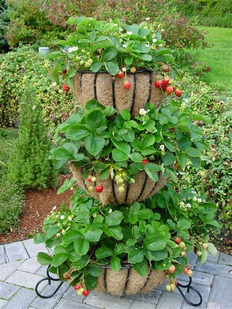 Strawberry Tower Planter by Best 25 Strawberry Planters Ideas On