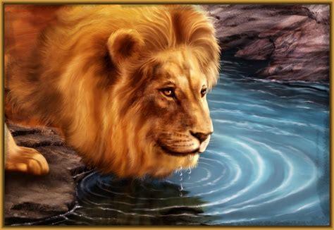 imagenes de leones amorosos fotos de leones africanos archivos imagenes de leones