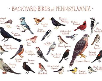 Backyard Bird Identification by Backyard Birds America Identification 2017 2018