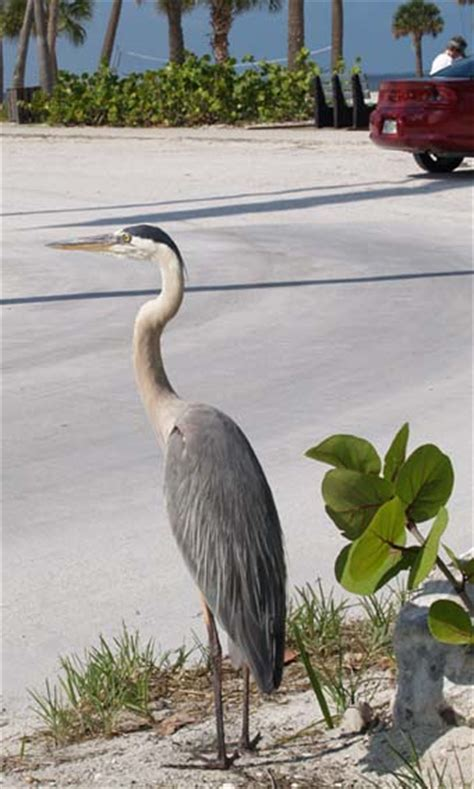 large florida birds