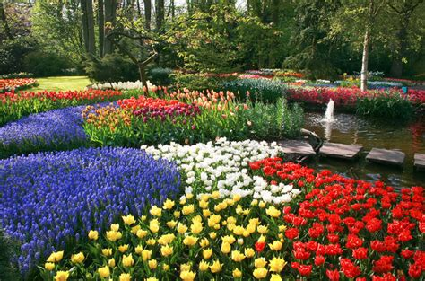 Keukenhof Gardens And Tulip Fields Tour From Amsterdam 2017 Flower Garden In Amsterdam