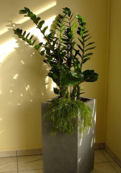 Zimmerpflanzen Feng Shui by Feng Shui Und Die Wirkung Der Pflanzen