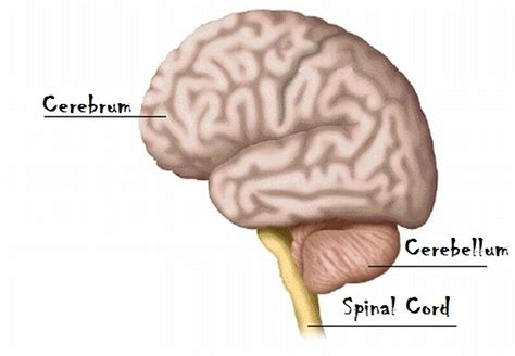 the largest section of the brain is the september 2012