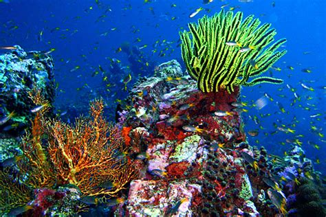 coral island  samui snorkeling tours thailand tours