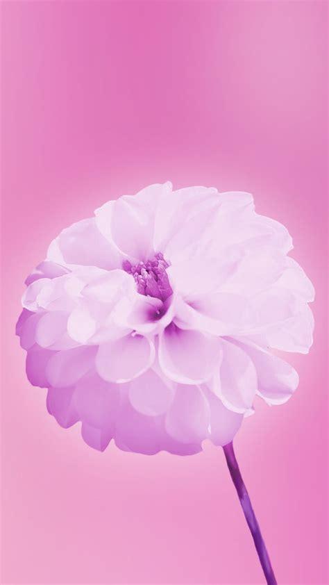 images  pink wallpaper  pinterest apple