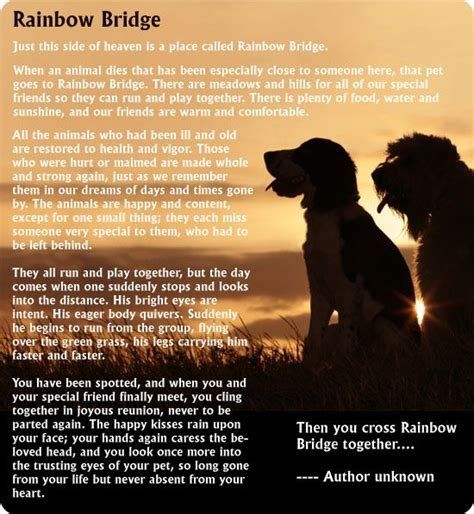 pets in heaven gift for owners 78 best images about crossing rainbow bridge and heaven on to heaven to say