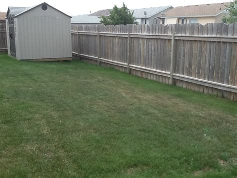 backyard fence line