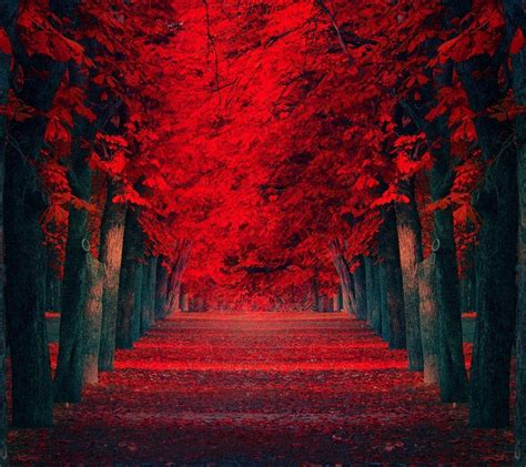 red nature wallpapers wallpaper cave