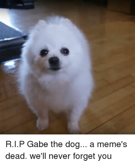 is gabe the dead search mr t dead memes on me me