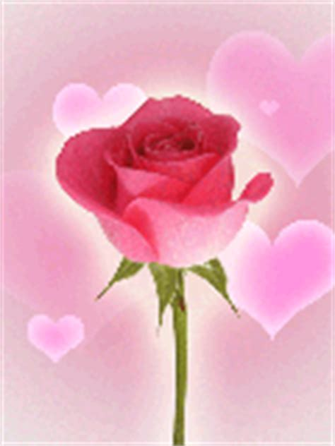 imagenes gif rosas rojas gifs animados de rosas rojas gifmania