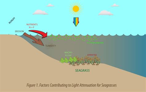 Light Attenuation by Untitled Document Www Seagrassli Org