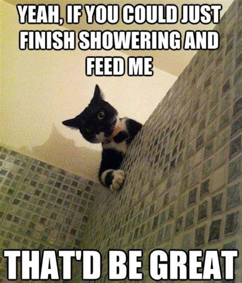 Sneaky Cat Meme - meow on pinterest veterinarians pets and cats