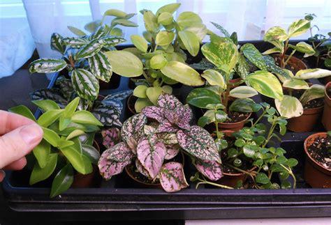 tiny plants miniature garden plants secrets to success the mini