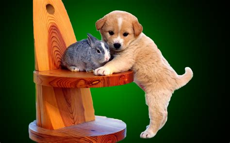 forever puppy friends forever puppy and rabbit beautiful hd wallpaper
