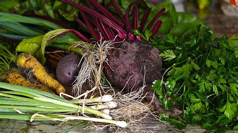 root crops vegetables 12 healthy root vegetables that should not be ignored