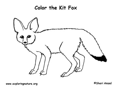 coloring page gray fox diagram of a fox coloring wiring library
