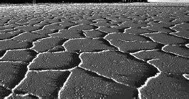 testo il sale della terra il sale della terra luciano ligabue