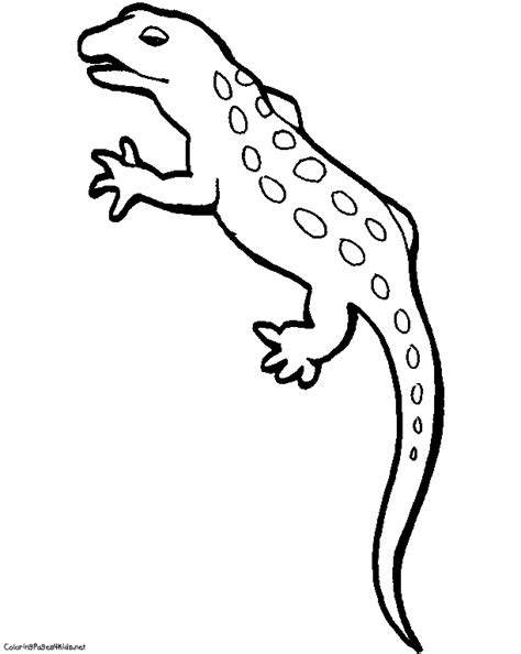 cute gecko coloring pages geico coloring book pages sketch coloring page
