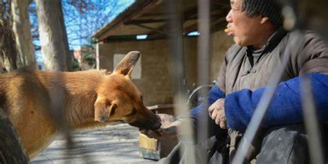 Kursi Roda Anjing inspiring anjing dorong kursi roda pria lumpuh bukti