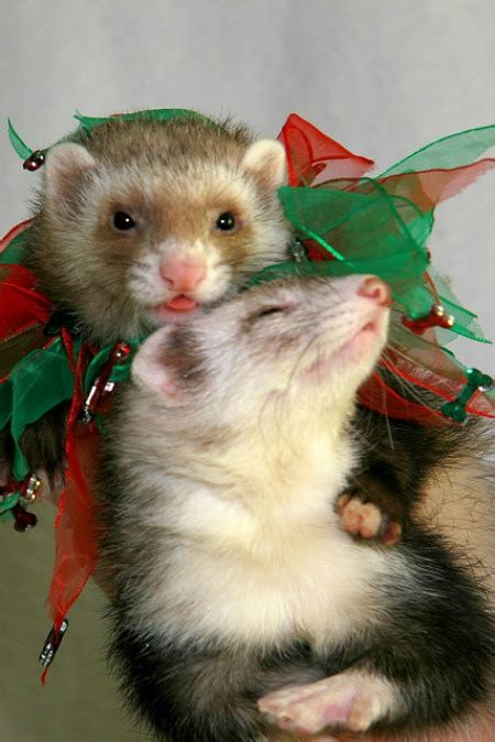 cutest examples  animals celebrating christmas cutest animals christmas animals oddee